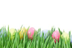 Easter eggs in grass. Row of easter eggs in grass with tulips isolated on white background Stock Photography