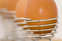 Row of eggs in holders Stock Photography