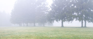 Row of evergreen trees in misty field Royalty Free Stock Photo