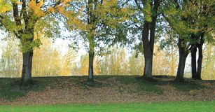 Row of fall trees. Bed of colorful leaves on the ground stock photos