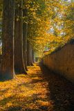 Row of fall trees Royalty Free Stock Photography
