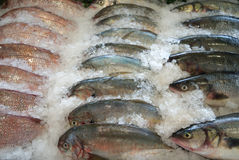 Row fish on an ice. In fish market Royalty Free Stock Photos