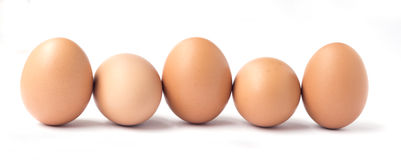 Row of five brown chicken eggs. Royalty Free Stock Photo