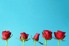 Row of Five Red Roses Standing Upright against Light Blue Backgr Royalty Free Stock Photos