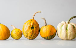 Row of five various organic gourds of decorative pumpkins Stock Photography