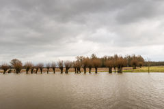Row of flooded trees and a cloudy sky Royalty Free Stock Images