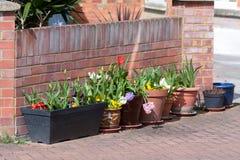 Row of flower pots in garden Stock Photo