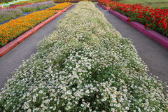 Row of flowerbed Royalty Free Stock Images