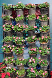 Row of flowers pots Royalty Free Stock Image