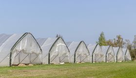 Row with foil tents. In which asparagus is grown stock images