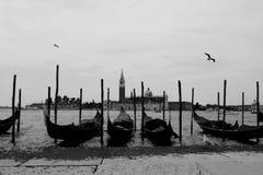 Row of four gondola`s with birds in Venice, Italy.  Royalty Free Stock Photo
