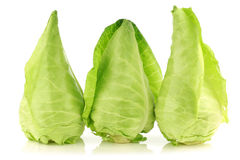 Row of fresh green pointed cabbages Stock Images