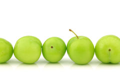 Row of fresh jujube fruit (Ziziphus jujuba) Stock Images