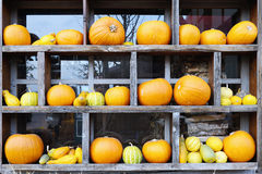 Row of fresh pumpkins in wooden frame royalty free stock photo