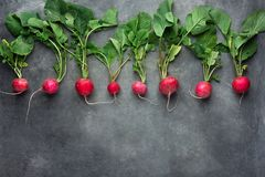 Row of Fresh Raw Organic Red Radishes with Greenn Leaves Arranged in Upper Row Border on Dark Concrete Stone Background. Copy Space for Text. Website Banner Royalty Free Stock Image