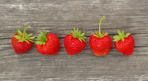 Row of fresh strawberry Stock Photos