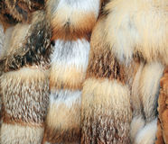 Row of fur coats of different colors Royalty Free Stock Image