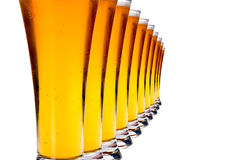 Row of glasses with lager beer Stock Image