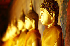Row of golden buddha statue Royalty Free Stock Photo