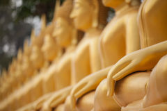 A row of golden Buddha statue Stock Photos