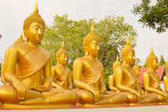 Row of Golden Buddha statue in Thailand Phichit, Thailand Stock Image