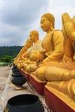Row of golden buddha statue Stock Image