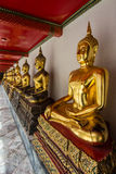 Row of  Golden  Buddhas Royalty Free Stock Image