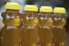 Row of Golden Honey Bears Stock Image