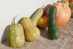 Row of gourds Stock Photos