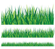 Row of grass Stock Image
