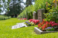 Row of grave stones with red and pink flowers royalty free stock photo