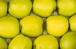 Row of green apples. Royalty Free Stock Photography
