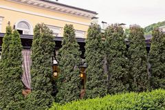 A row of green ornamental firs near the wall of a building outside in the park. A row of tall green ornamental firs near the wall of a building outside in the royalty free stock photography