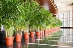 Row of green pot plants Stock Photography