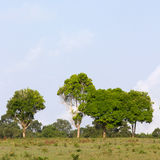 Row of green trees Stock Images