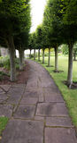 Row of green trees curving round paved path. A row of very bushy green trees planted alongside a curved, paved, path in Haddington, Scotland Royalty Free Stock Image