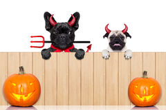 Row of halloween dogs Royalty Free Stock Image