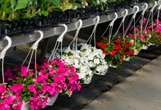Row of Hanging baskets of flowers Royalty Free Stock Photos