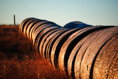 Round hay bales. Lined up along the side of a field Royalty Free Stock Photo