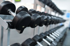 Row of heavy iron dumbbells on a rack at gym Stock Photography