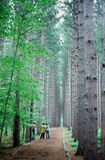 A row of hikers. Hikers walk along a path througha forest Royalty Free Stock Photo