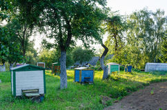Row hives between tree sun lit rural garden Royalty Free Stock Images