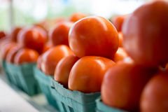 A row of homegrown tomatoes on display Royalty Free Stock Image