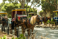 Row of horse with carriages in Mdina Royalty Free Stock Image