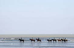 A row of horses along the sea Royalty Free Stock Image