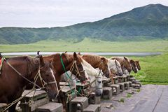 Row of horses at meadow Royalty Free Stock Image