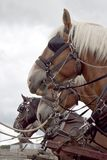 Row of horses tied to hitching rail Royalty Free Stock Photo
