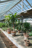 Row of Hot House Plants. A hot house filled with plants which thrive in a hot, humid environment Royalty Free Stock Photo