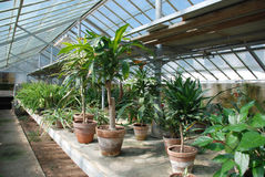 Row of Hothouse Plants Stock Images