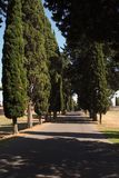 Row of Italian Cypress trees on the famous Appian Way. Along the ancient Roman road Via Appia Antica, a row of classic Italian Cypress trees line the path on a stock photo
